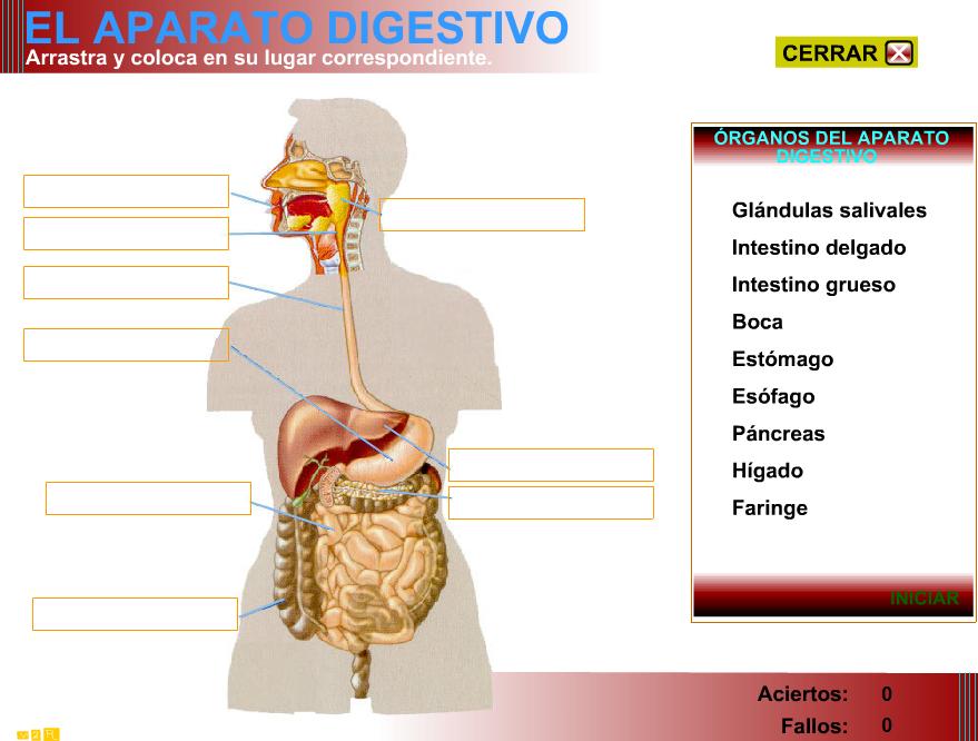 Aparato digestivo | Blog de Alquería TIC