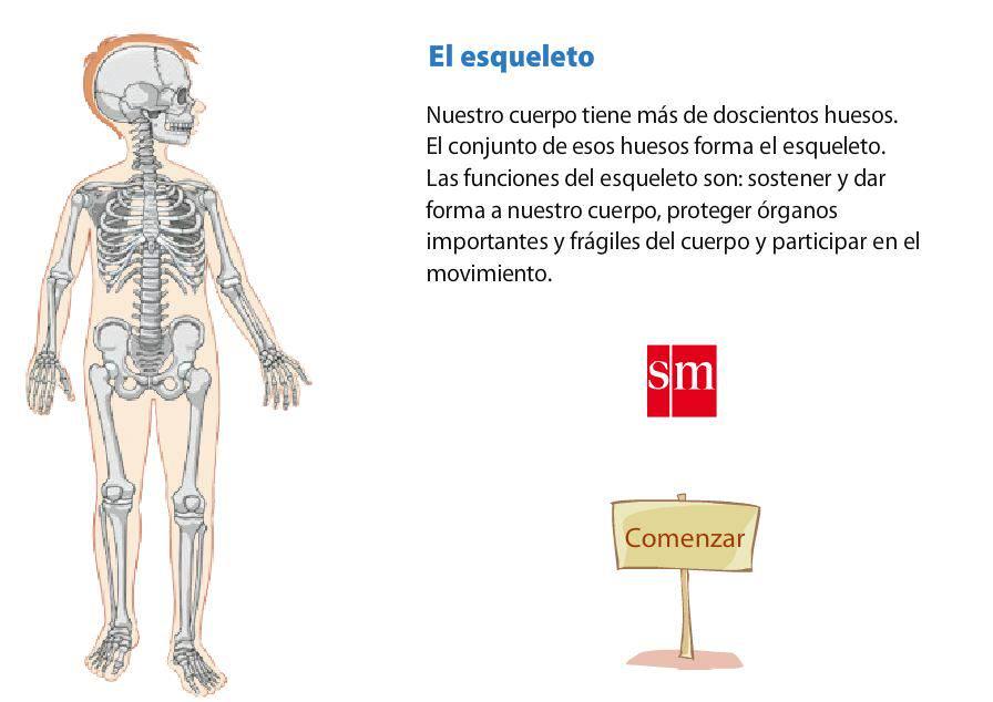 Huesos | Blog de Alquería TIC