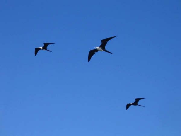 15644_aves