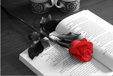 la-rosa-y-el-libro1