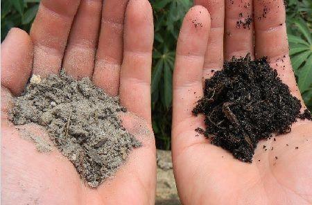 suelo-arenoso