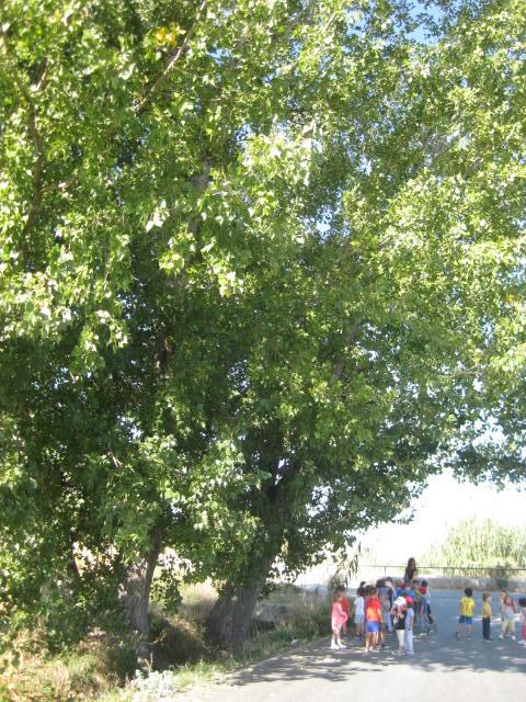 ACTIVIDADES DE CICLO: SALIDA A LA VEGA Y TARDE COOPERATIVA | Blog de Infantil Roja – Verde